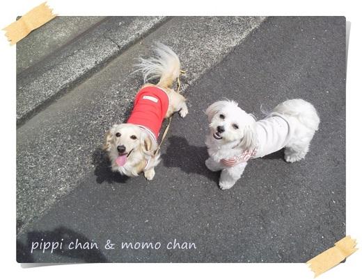 pippi&momo.JPG